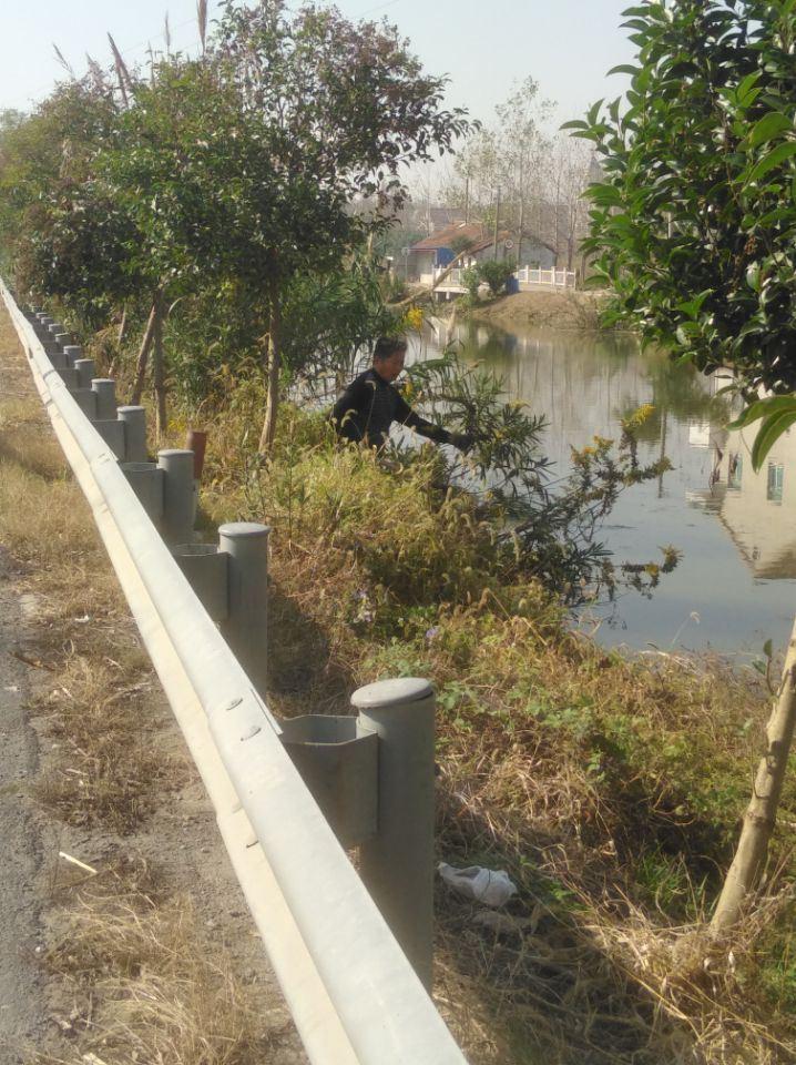 东海镇大丰镇村河岸垃圾清理志愿者活动