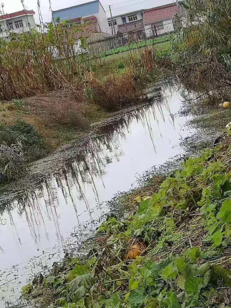 东海镇大丰镇村清理河道垃圾活动